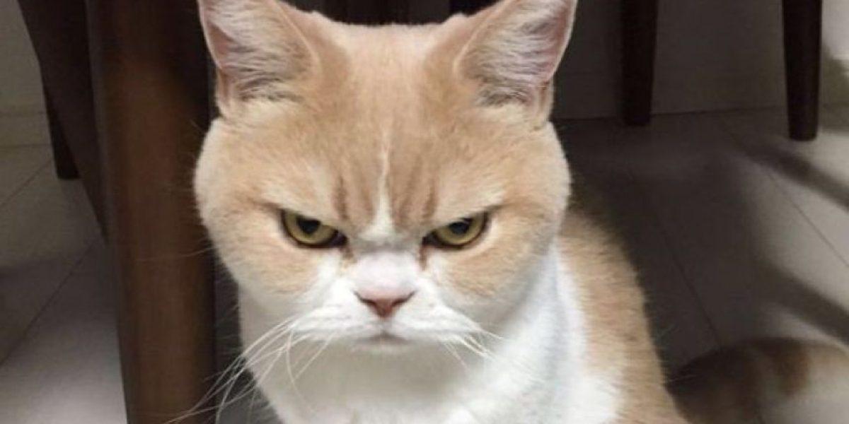 Mujer llama al 911 para reportar que es rehén de su propio gato