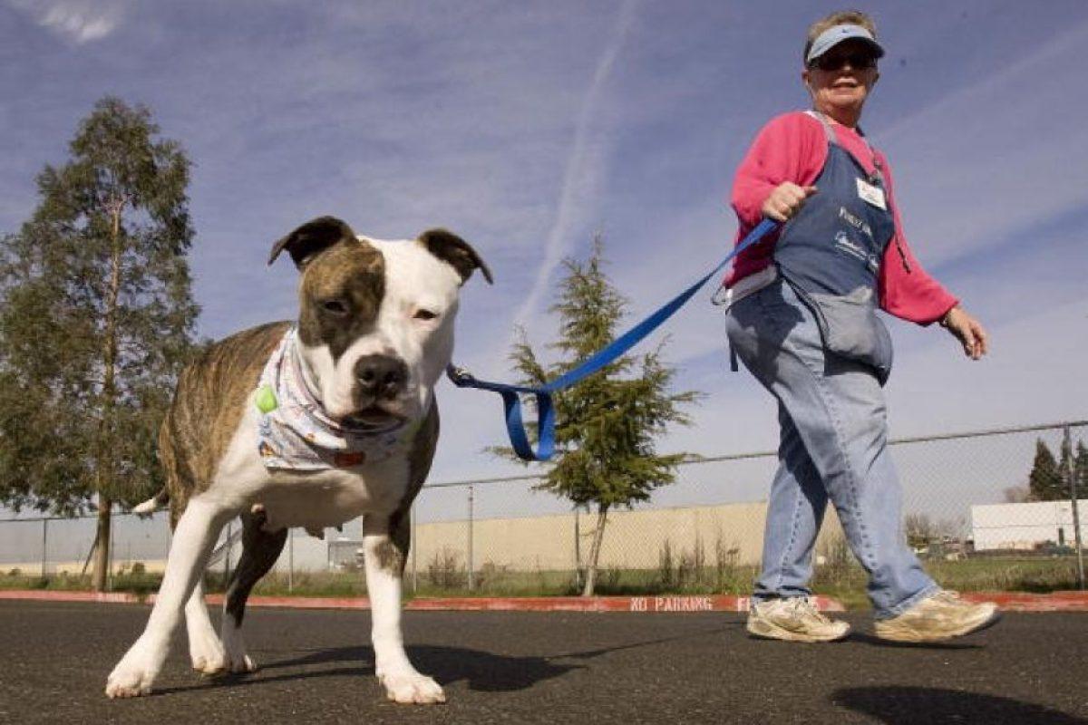 """""""Lo que se le enseña a un niño de cómo tratar a un perro, es en esencia, el cómo tratar a otra personas"""". Foto:Getty Images"""