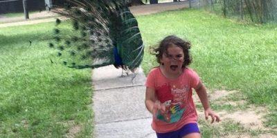 HUMOR. Niña es perseguida por un pavo real y divertidos memes no podían faltar