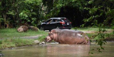Foto:Autosafari Chapín