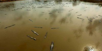 """Especialistas aseguran que se trata del fenómeno de """"extinción por atarquinamiento"""". Foto:AP"""
