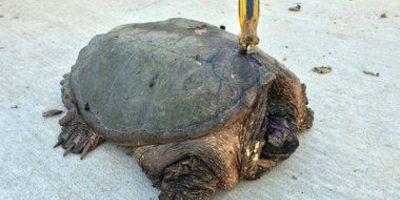 Tortuga de 100 años sobrevive a cruel maltrato animal