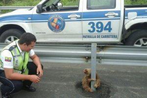 Pero se asustó por el paso de los automóviles y se sostuvo de una barra de protección Foto:facebook.com/ctecuador