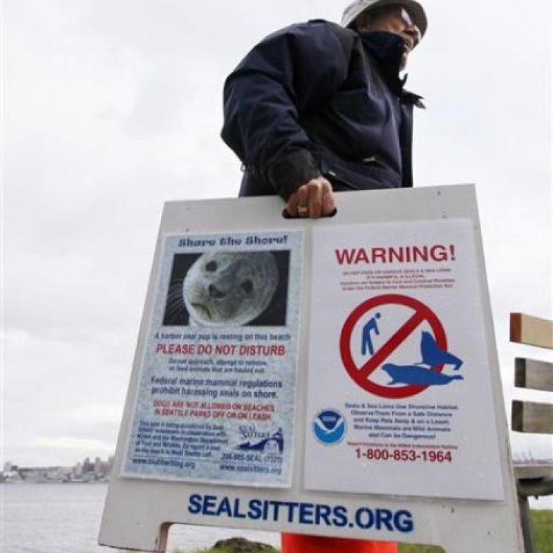 La cría de foca tuvo que ser sacrificada Foto:AP