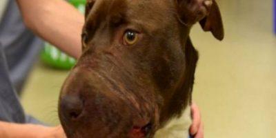 A esta perrita le amarraron la boca con cinta en Charleston. Foto:vía Asociación Protectora de Animales de Charleston.