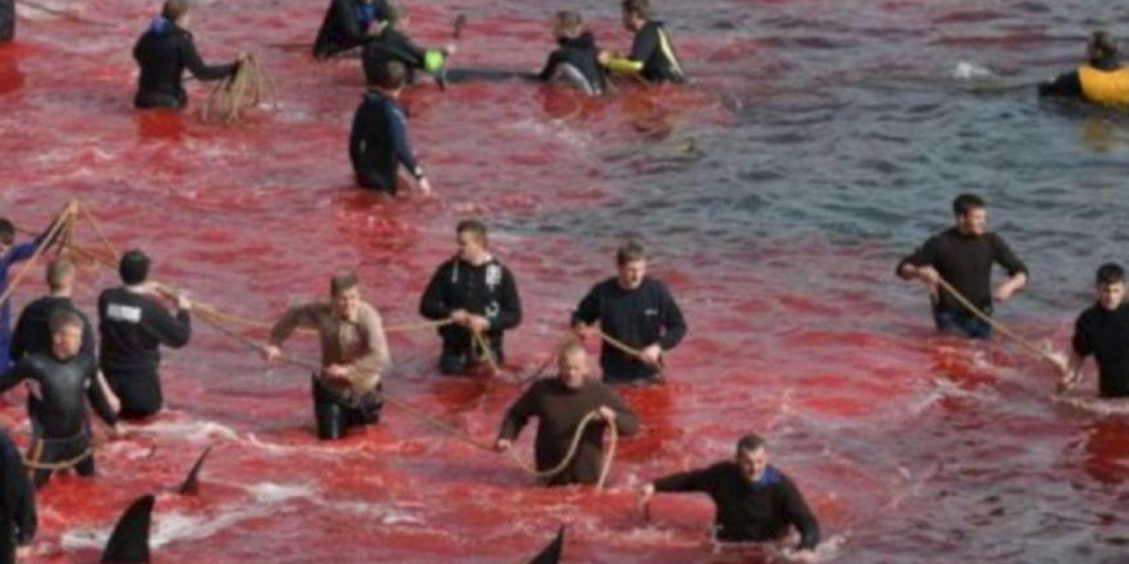 En las Islas Feroe se hace un macabro ritual con ballenas. Foto:vía Sea Shepherds
