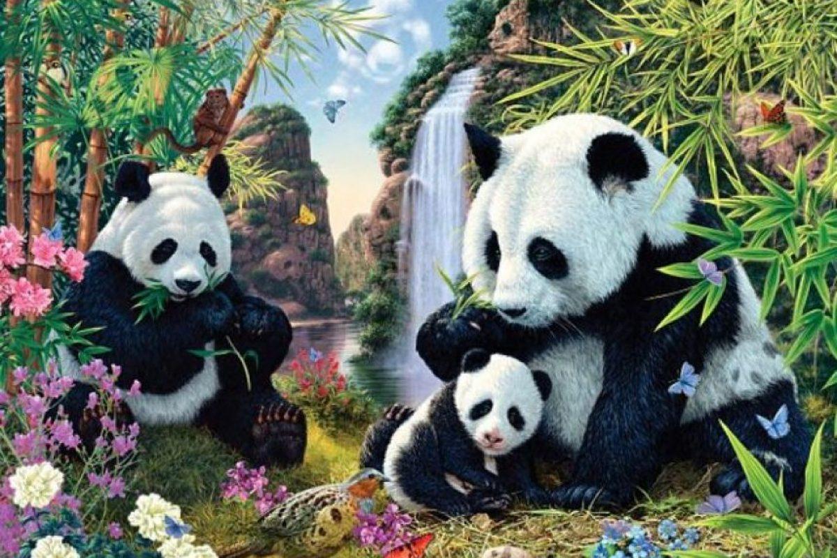 Aquí hay 12 pandas escondidos, ¡encuéntrenlos! Foto:Creada por Steve Read