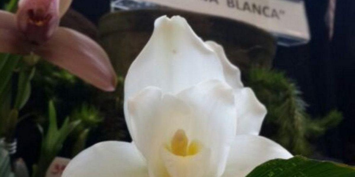 Diputado propone que la Monja Blanca sea declarada símbolo patrio por ley