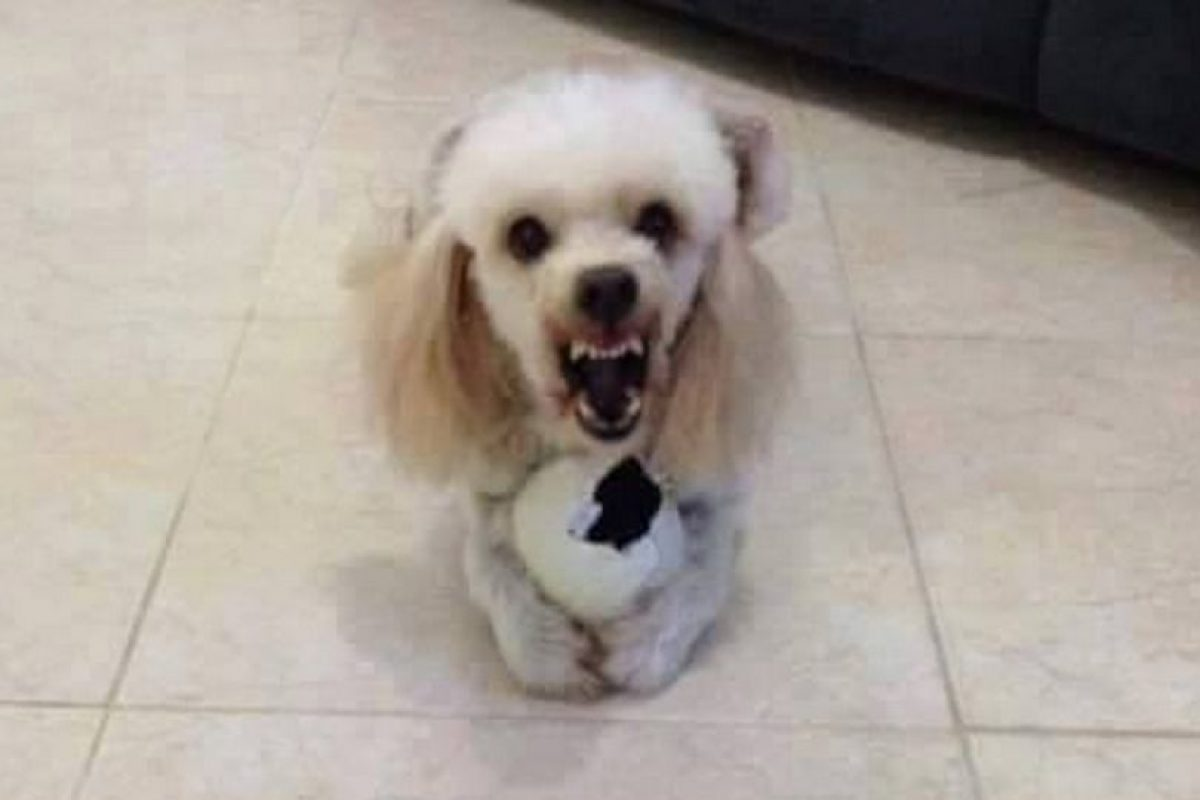 A Luki le encanta jugar con sus muñequitos.