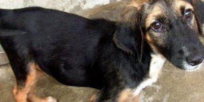 Perritos antes y después de ser rescatados Foto:Reddit