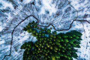 Primer lugar: Bosque Kalbyris, en Dinamarca Foto:Autor: Mbernholdt – Dronestagram.com