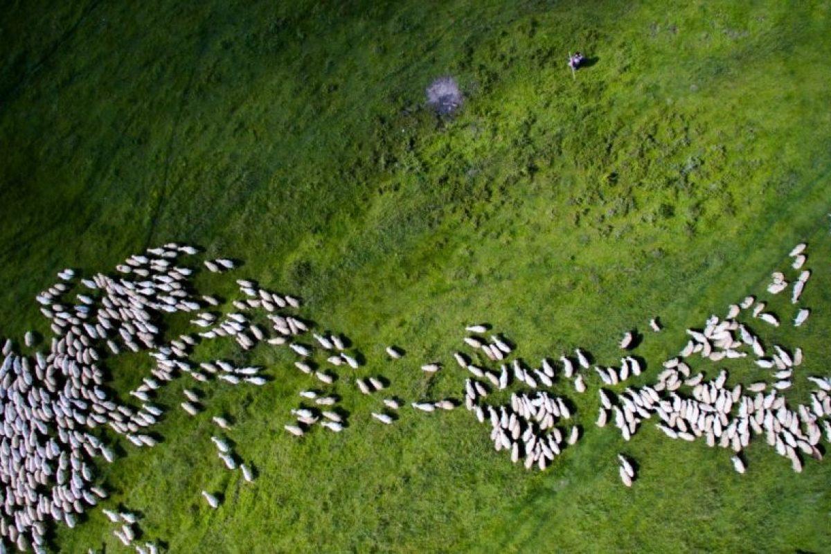 Segundo lugar: Enjambre de ovejas Foto:Autor: Szabolcs Ignacz – Dronestagram.com