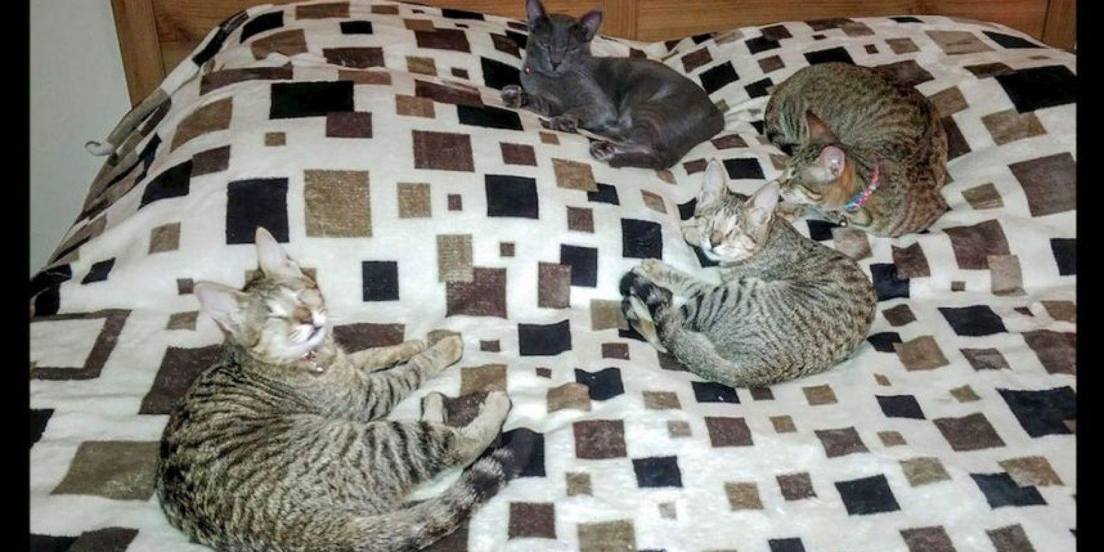 Blue, Meadow y Little Willow son tres gatos ciegos que fueron adoptados por Catherine Magno Foto:Facebook Three Blind Cats