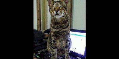 Y, al contrario de lo que se pensaba, no necesitaron de grandes cuidados especiales. Foto:Facebook Three Blind Cats