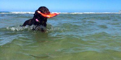 14 meses han pasado y Bella aún sigue atrapando el frisbee que Robert le arroja en cada rincón que visitan. Foto:Facebook Robert Kugler