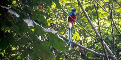 La deforestación pone en peligro al Quetzal