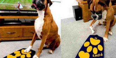 Los perros decidirán qué programa ver con este control remoto