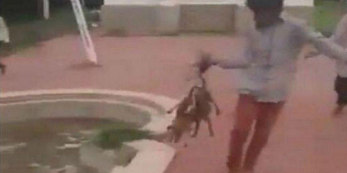Detuvieron a 8 adolescentes por quemar vivos a 3 perros