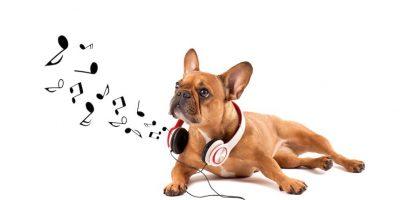¿Qué tipo de música le puede gustar a tu perro? Entérate aquí