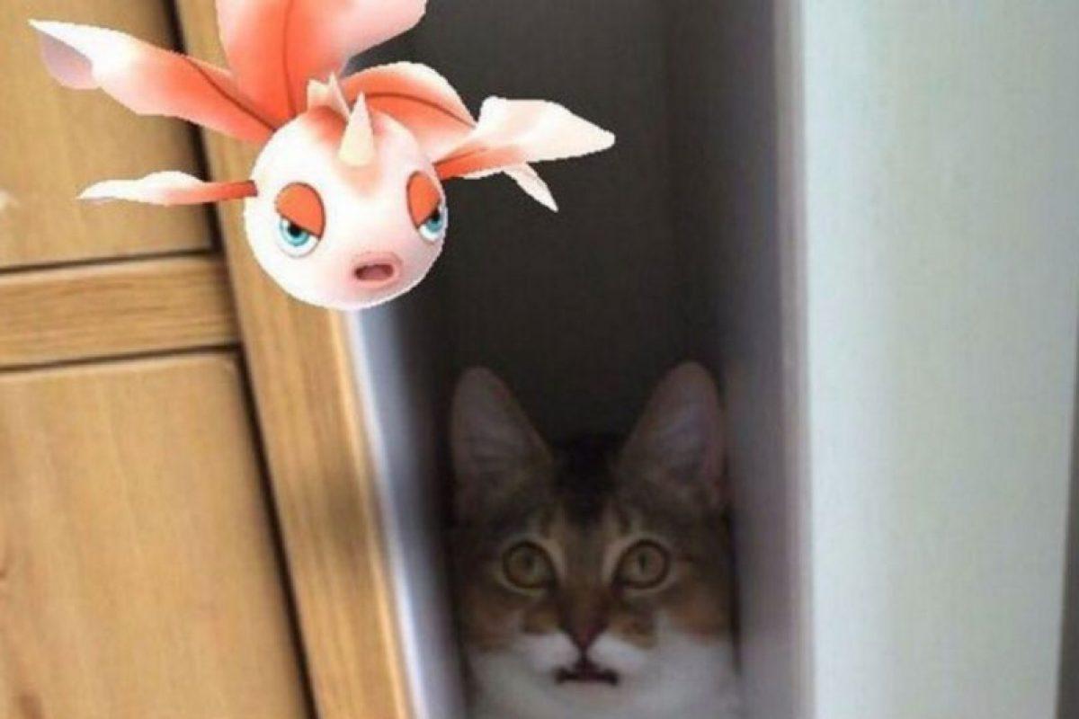 6.- Ditto: Si bien no es un pokémon legendario, es igual de complicado encontrarlo en el juego. Foto:Wiki Pokémon