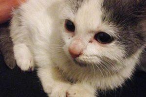 Cualquier animal sin hogar se transforma. Foto:Imgur