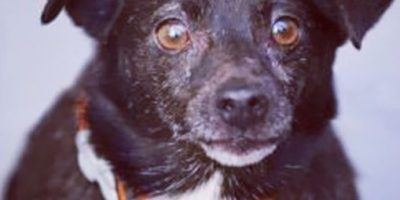 Rescatan a perritos bañados en alquitrán caliente en Rumanía