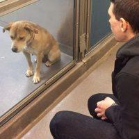 La adopción es la mejor ayuda para erradicar el problema de los animales callejeros. Foto:Imgur
