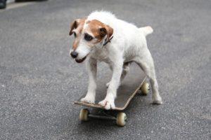 3. Esterilizar a los perros y gatos Foto:Getty Images