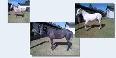 Los caballos. Foto:Publinews