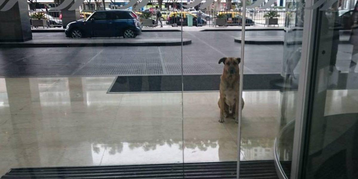 Un perro esperó durante 6 meses a una azafata para que lo adoptara
