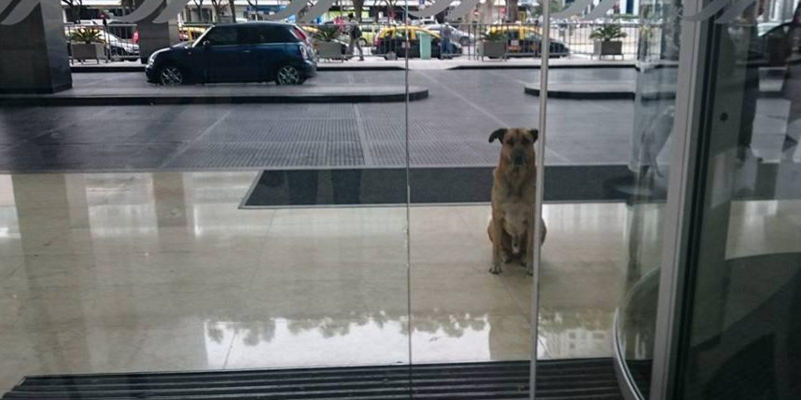 El perro esperaba a la azafata cada día en el hotel Hilton Foto:Facebook: Mascotas Puerto Madero Adopciones Responsables