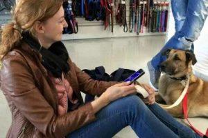Al final, terminaron juntos Foto:Facebook: Mascotas Puerto Madero Adopciones Responsables