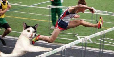 Japón y hasta Rusia están enloqueciendo con este gato. Foto:Twitter
