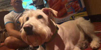 VIDEO. Wally el perro estuvo a punto de ser asesinado por su dueño
