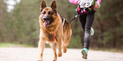 """Corre con tu """"Mejor Amigo"""" y contribuye al rescate de animales"""