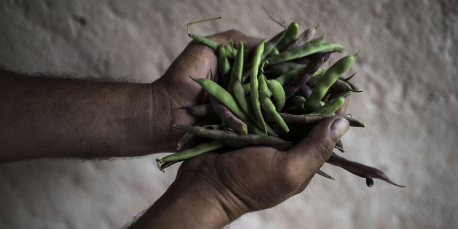 La cosecha de frijol no fue la esperada en caseríos de Camotán y Jocotán Foto:Oliver de Ros