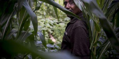 Los agricultores esperan lluvia para rescatar parte de su cosecha. Foto:Oliver de Ros