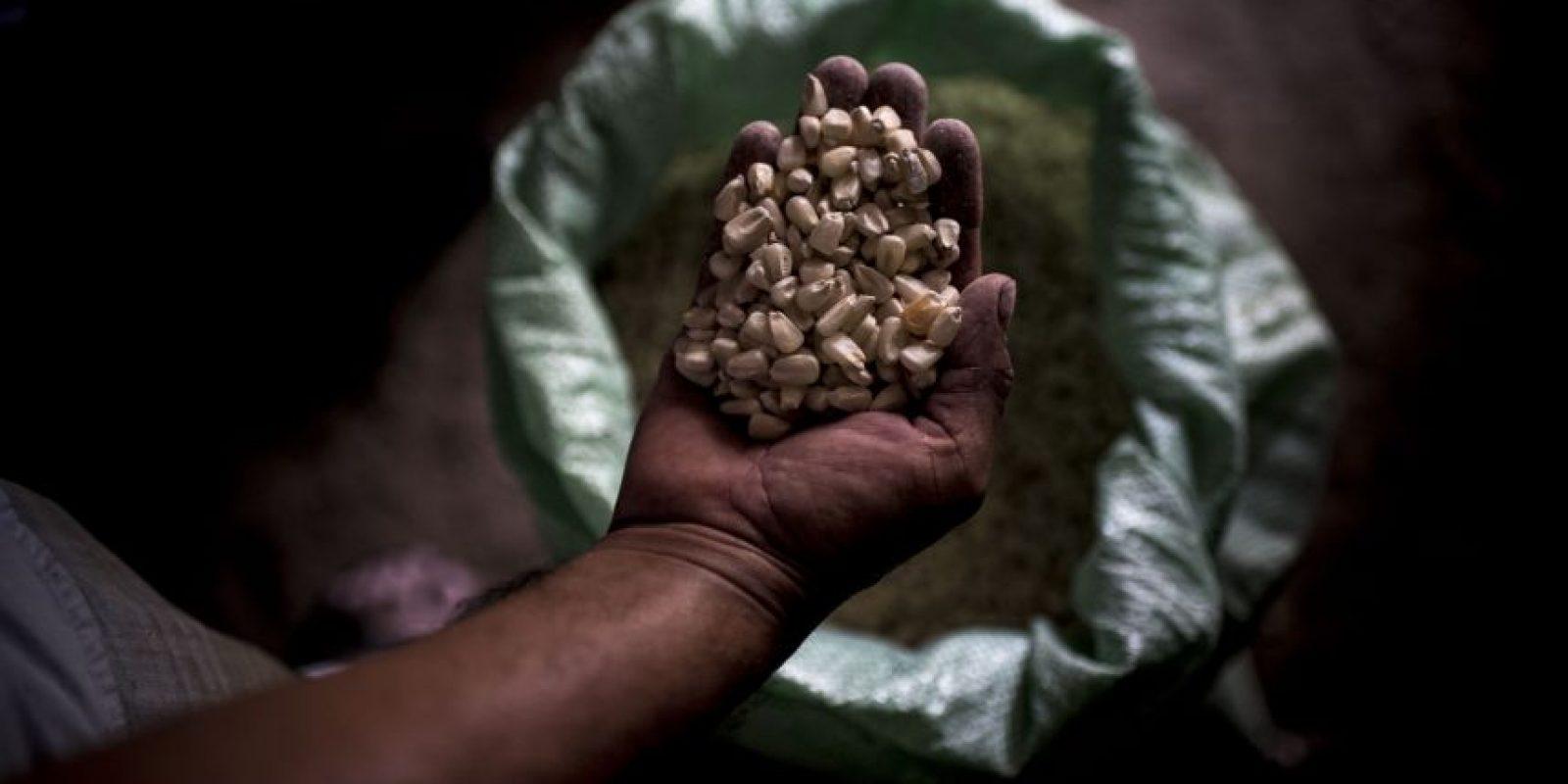 La poca cosecha rescatada no es de la mejor calidad. Foto:Oliver de Ros