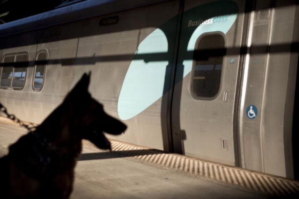 No fue sino hasta la Primera Guerra Mundial que países como Bélgica y Alemania formalizaron el proceso de formación y comenzaron a usar perros para tareas específicas, como la guardia. Foto:Getty Images