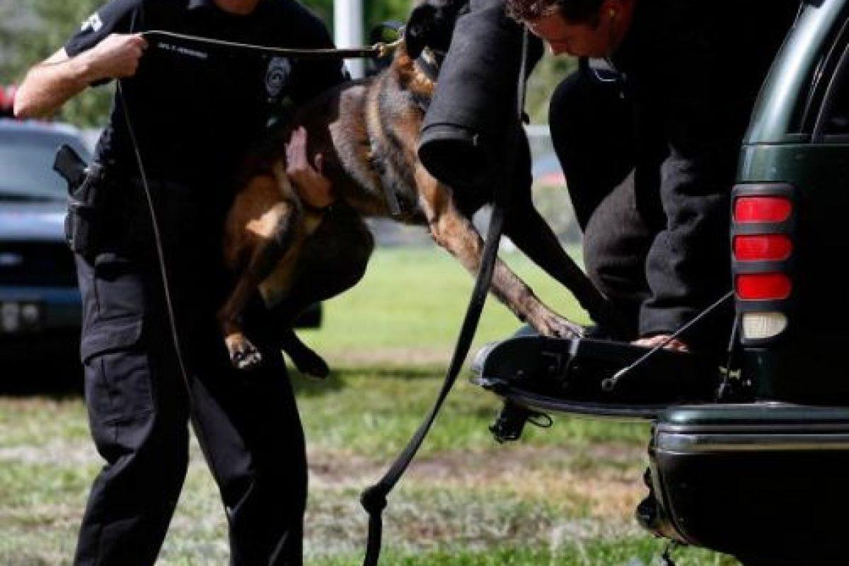 Los atributos clave de un perro exitoso son inteligencia, nivel de agresión, fuerza y sentido del olfato. Foto:Getty Images