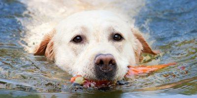 Hay algunos que por naturaleza son mejores nadadores. Foto:Pixabay