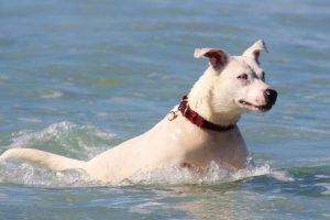 ¿Todos los perros saben nadar? Foto:Pixabay