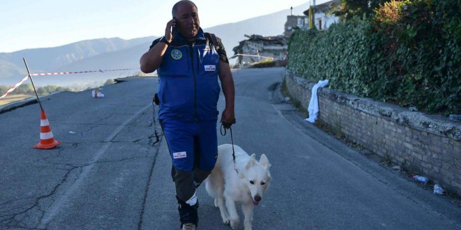 Los perros han sido de gran ayuda en los rescates Foto:Getty Images