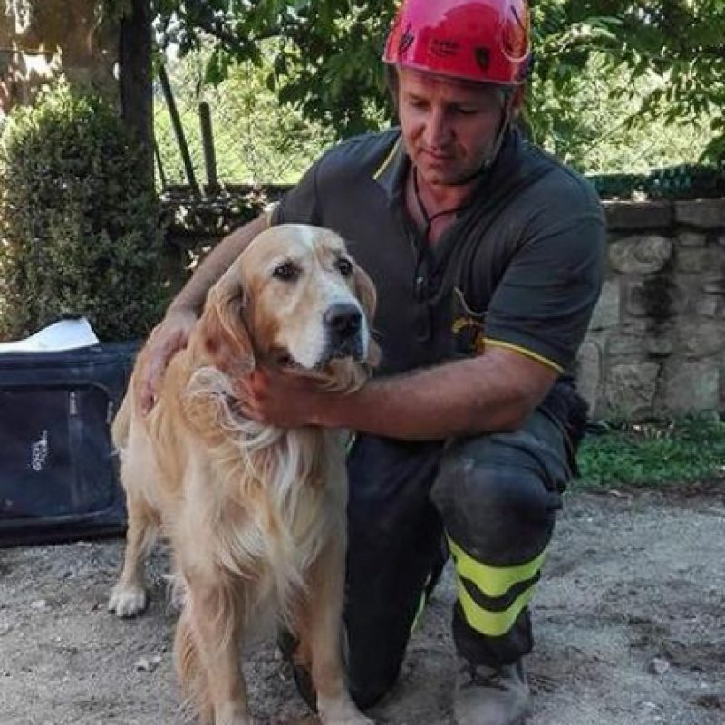 Romeo, el golden retriever rescatado Foto: AP