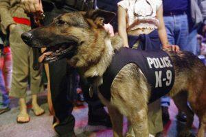 ¿Por qué se usan perros el labores policiacas? Foto:Getty Images