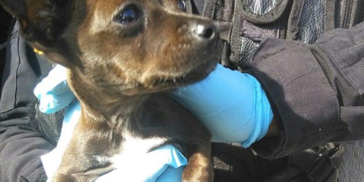 PNC recupera joyas, artículos de valor y un perro chihuahua