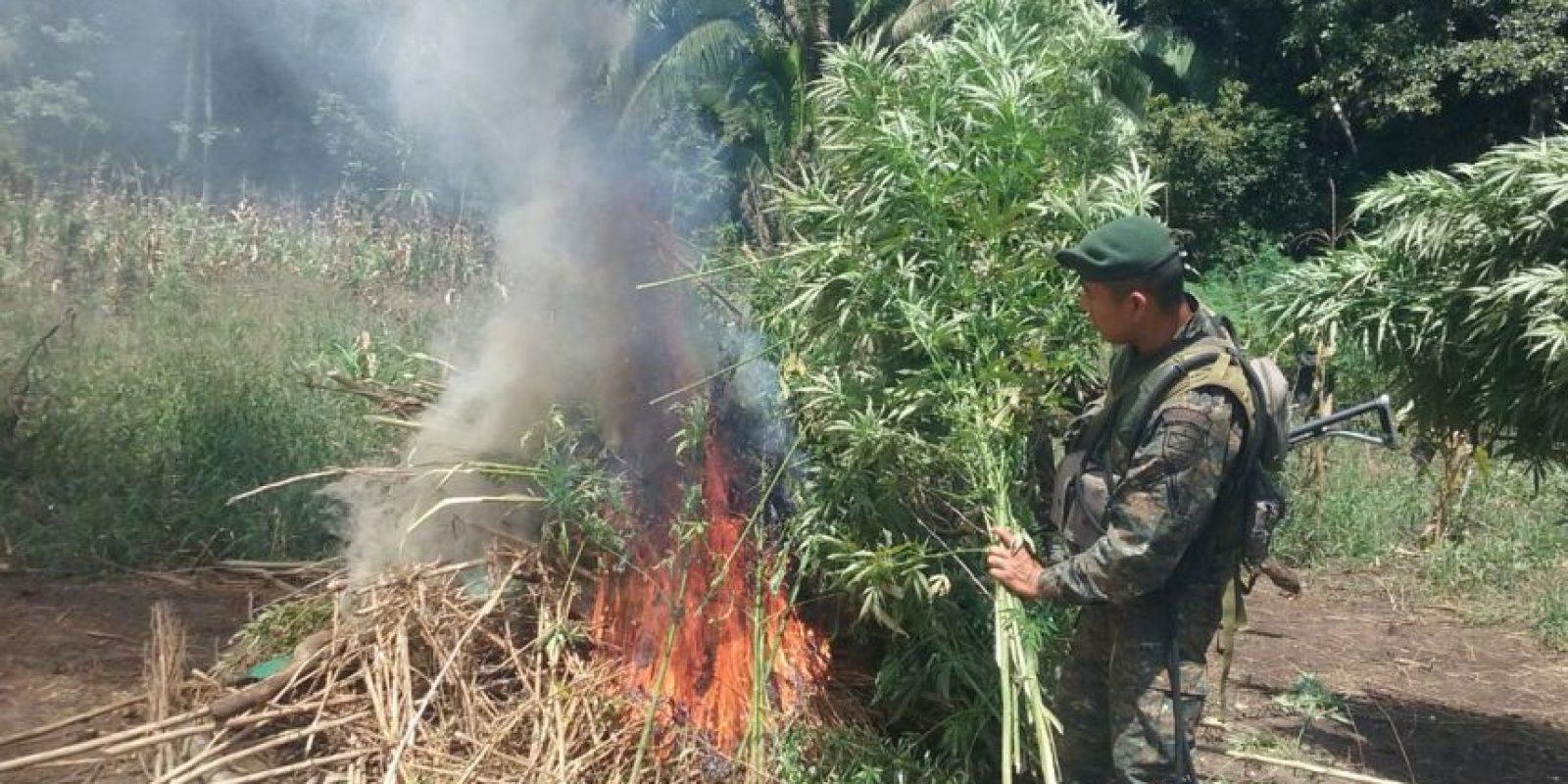 La quema de la marihuana. Foto:Ejército