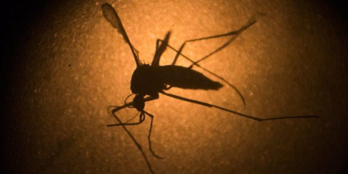 Confirman casos de microcefalia en Guatemala relacionados al virus zika
