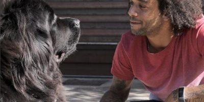 Instagram Foto:Marcelo tiene tres perros: Lola, un terranova, Kiara, un bulldog francés, y Thaig, un bulldog inglés.