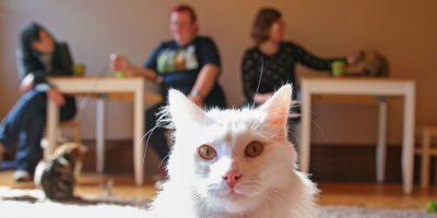 """Abrazar y besar a su gato """"podría matarlos"""", según la ciencia"""